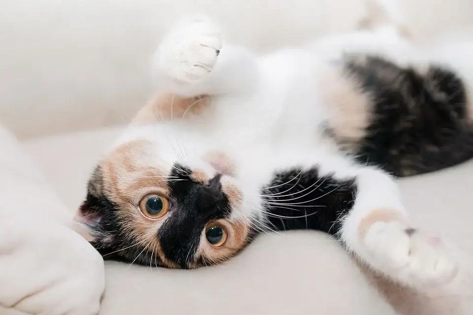 Jakie akcesoria dla kota wybrać?